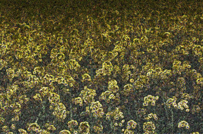 fleurs-étranges-copie